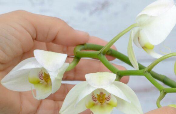 Afloday Orkide Bakım Tüyoları Offline & Online Atölye Workshop Hizmeti